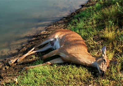 dead-deer-in-yard