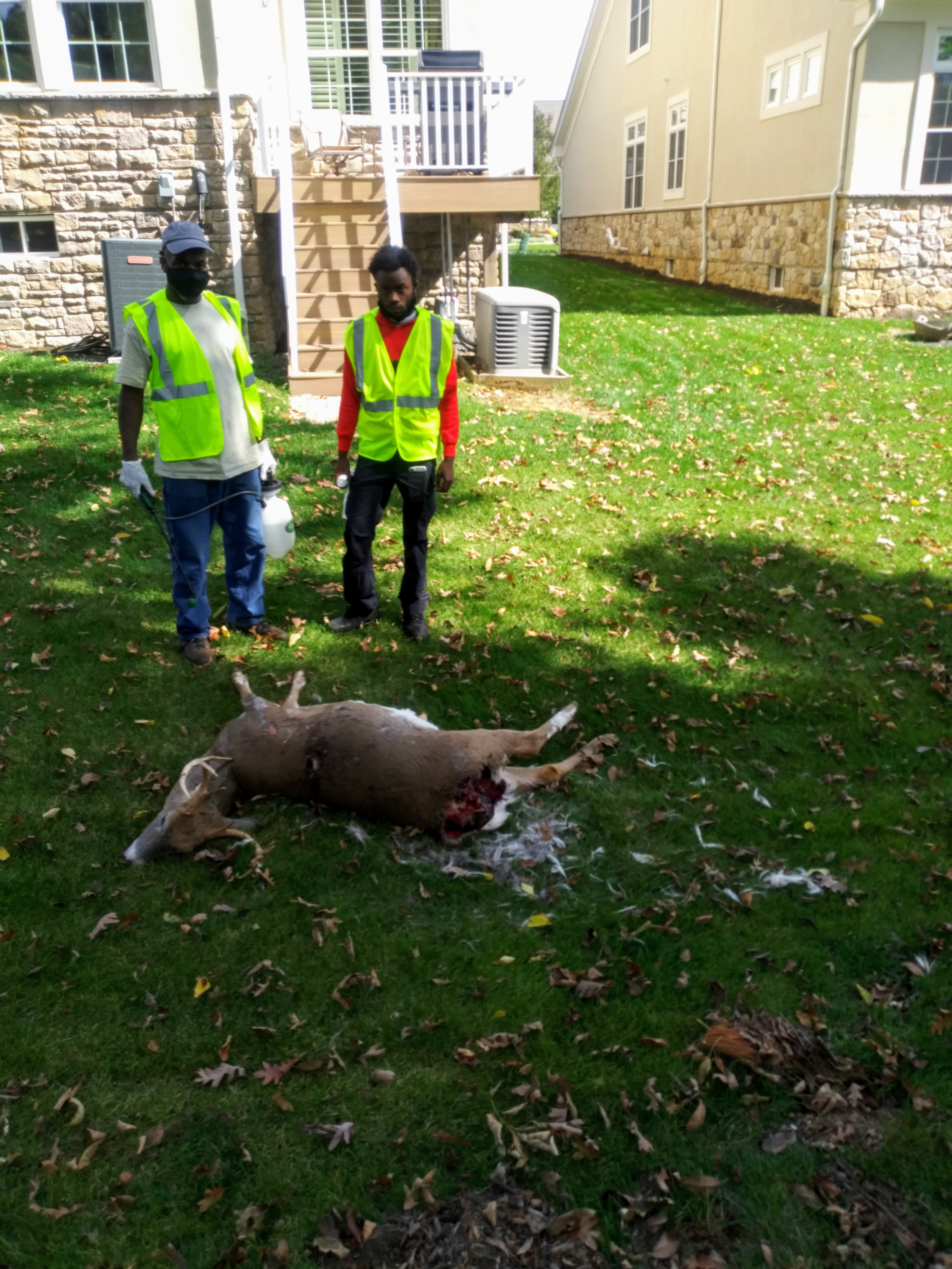 Our Dead deer removal technicians on a service run..